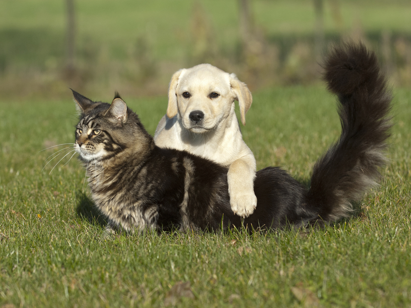 Chien chat camping